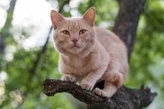 Rode kattenzitting op een boom in de lentedag Stock Foto