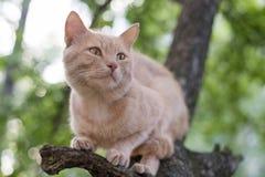 Rode kattenzitting op een boom in de lentedag Stock Afbeelding