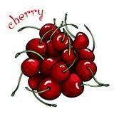 Rode kersen stock illustratie