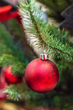 Rode Kerstmisbal op de Kerstmisboom Stock Afbeeldingen