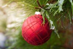Rode Kerstmisbal op ijzige altijdgroene bladeren Royalty-vrije Stock Fotografie