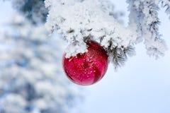 Rode Kerstmisbal op ijzige sparrentakken De achtergrond van het de winteronduidelijke beeld Royalty-vrije Stock Fotografie