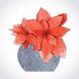 Rode Kerstmisbloemen in Steenvaas Stock Afbeeldingen