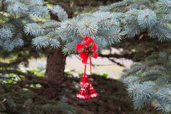 Rode Kerstmisklokken op echte blauwe nette boom Pluizige takken van Stock Foto
