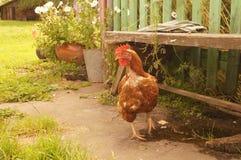 Rode kip in de werf Royalty-vrije Stock Afbeeldingen