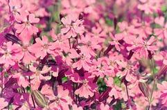 Rode kleine bloemen Stock Afbeelding