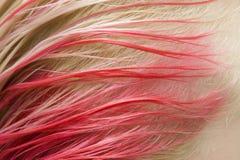 Rode kleur van haar Royalty-vrije Stock Foto