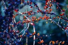 Rode klimplant Stock Afbeeldingen