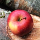 Rode knapperige appel Royalty-vrije Stock Afbeeldingen