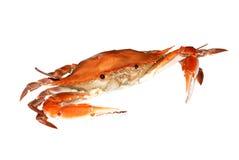 Rode krab Royalty-vrije Stock Foto