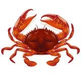 Rode krab Stock Afbeelding