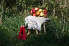 Rode laarzen, algemene en organische de herfstappelen in een mand op een houten lijst in een boomgaard royalty-vrije stock foto's