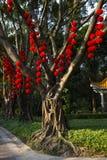 Rode Lantaarns Stock Afbeeldingen