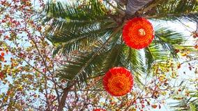 Rode lantaarns op Chinese Nieuwjaargebeurtenis in Hawaï met Kokospalmen stock foto