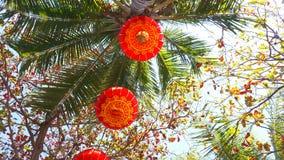 Rode lantaarns op Chinese Nieuwjaargebeurtenis in Hawa? met Kokospalmen royalty-vrije stock foto's