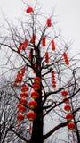 Rode lantaarns op een boom voor Chinees Nieuwjaar royalty-vrije stock foto
