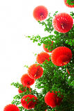 Rode lantaarns voor Chinees nieuw jaar stock foto