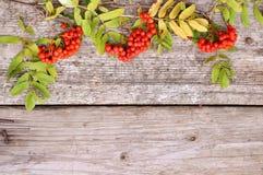 Rode Lijsterbes op houten achtergrond in de herfst flatley stock foto's