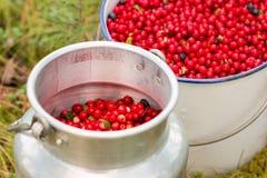 Rode lingonberries in nostalgische emmers Stock Fotografie