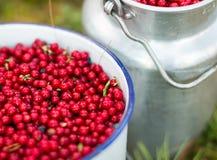 Rode lingonberries in nostalgische emmers Stock Afbeelding