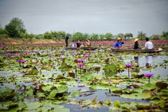 Rode Lotus Floating Market in Thailand stock afbeelding
