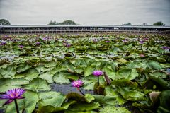 Rode Lotus Floating Market in Thailand royalty-vrije stock fotografie