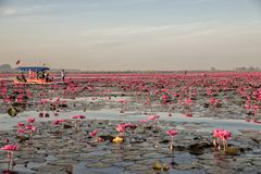 Rode Lotus Lake in Han Kumphawapi in Udonthani, Thailand stock afbeeldingen