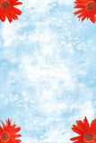 Rode Madeliefjes Gerbera in de hoeken met blauw water Royalty-vrije Stock Afbeeldingen