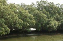 Rode mangrove Stock Foto's
