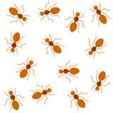 Rode mieren Naadloze achtergrond Stock Afbeeldingen