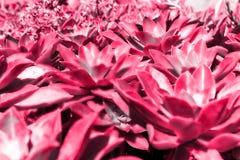 Rode mooie Afrikaanse bloem op een zonnige dag stock fotografie