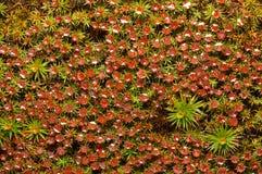 Rode mosachtergrond Royalty-vrije Stock Fotografie