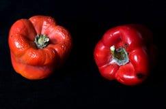 Rode moyldy peper op een zwarte achtergrond Royalty-vrije Stock Foto's