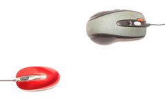 Rode muis versus grijze muis 2 Stock Afbeeldingen