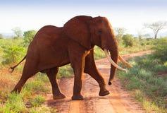 Rode olifanten op de weg in het Nationale park van Tsavo Stock Afbeelding