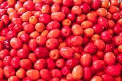 Rode olijven Stock Foto's