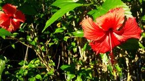 Rode of oranje bloemen? Regendruppels of zonlicht? royalty-vrije stock fotografie