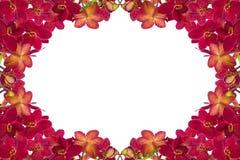 Rode orchideeën Royalty-vrije Stock Afbeelding
