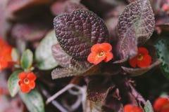 Rode Orchideeën met Groene Bladerenachtergrond Royalty-vrije Stock Foto's