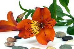 Rode orchidee en stenen royalty-vrije stock afbeelding