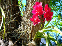 Rode orchidee in tuin stock afbeeldingen
