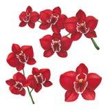 Rode orchideebloemen op een witte achtergrond Schets in alcohol wordt gedaan die stock afbeelding