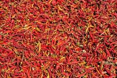Rode organische peper Stock Afbeelding
