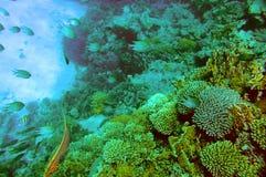 Rode Overzees Stock Afbeelding