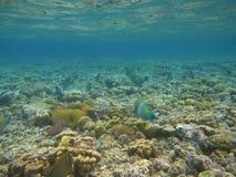 Rode overzees onderwater royalty-vrije stock afbeeldingen
