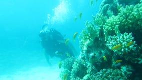 Rode overzeese duik stock afbeelding