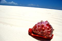 Rode overzeese shell op wit zand Stock Foto's