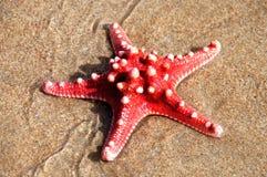 Rode overzeese ster   Stock Afbeeldingen