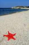 Rode overzeese ster op strand Stock Afbeelding