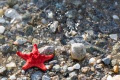 Rode Overzeese ster, steenstrand, schone waterachtergrond Stock Afbeeldingen